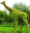 Топиарная фигура Жираф большой