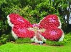 Топиарная фигура Бабочка-1