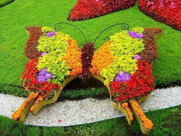 Топиарная фигура Бабочка королевская