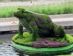 Топиарная фигура Лягушка