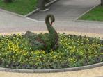 Топиарная фигура Лебедь