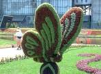 Топиарная фигура Бабочка