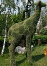 Топиарная фигура Жираф маленький