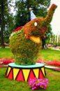 Топиарная фигура Слон Цирковой