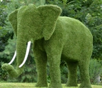 Топиарная фигура Слон