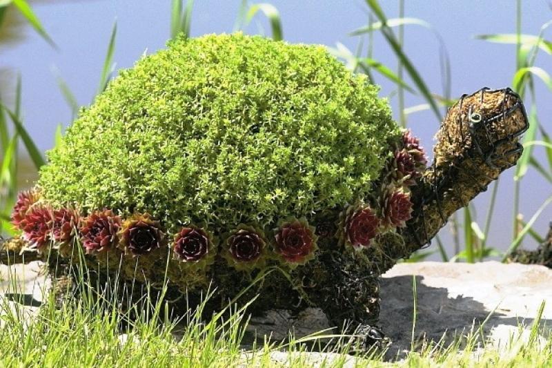 Топиарная фигура Большая черепаха